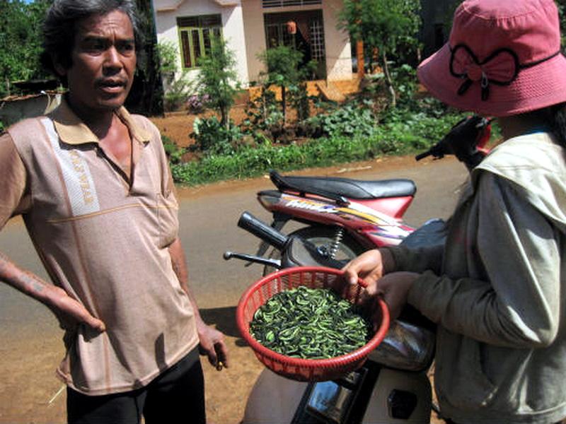 Sâu xanh được chế biến thành món ăn đặc sản. Ảnh: Internet