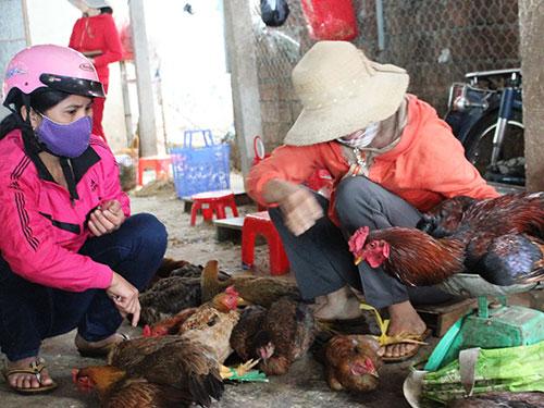 Việc buôn bán gà, vịt vẫn diễn ra bình thường tại chợ thị trấn Đức Phổ,  ngày 17-2 Ảnh: Tử Trực