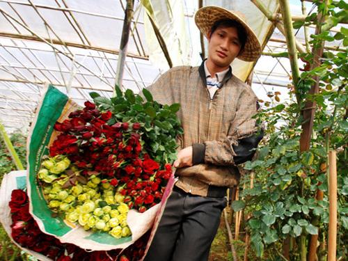 Hoa hồng nở nhanh và nhiều khiến giá bán giảm mạnh