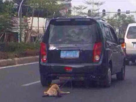 A dog being dragged behind a car