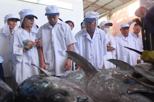 Lô cá ngừ đại dương đầu tiên của Bình Định bán đấu giá tại Nhật