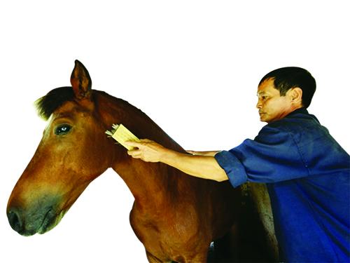 Ông Trần Thanh Tĩnh chăm sóc ngựa cưng. Ảnh: K.N