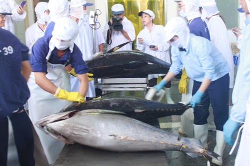 Kiểm tra cá ngừ đại dương Bình Định tại phiên đấu giá ở Nhật Bản