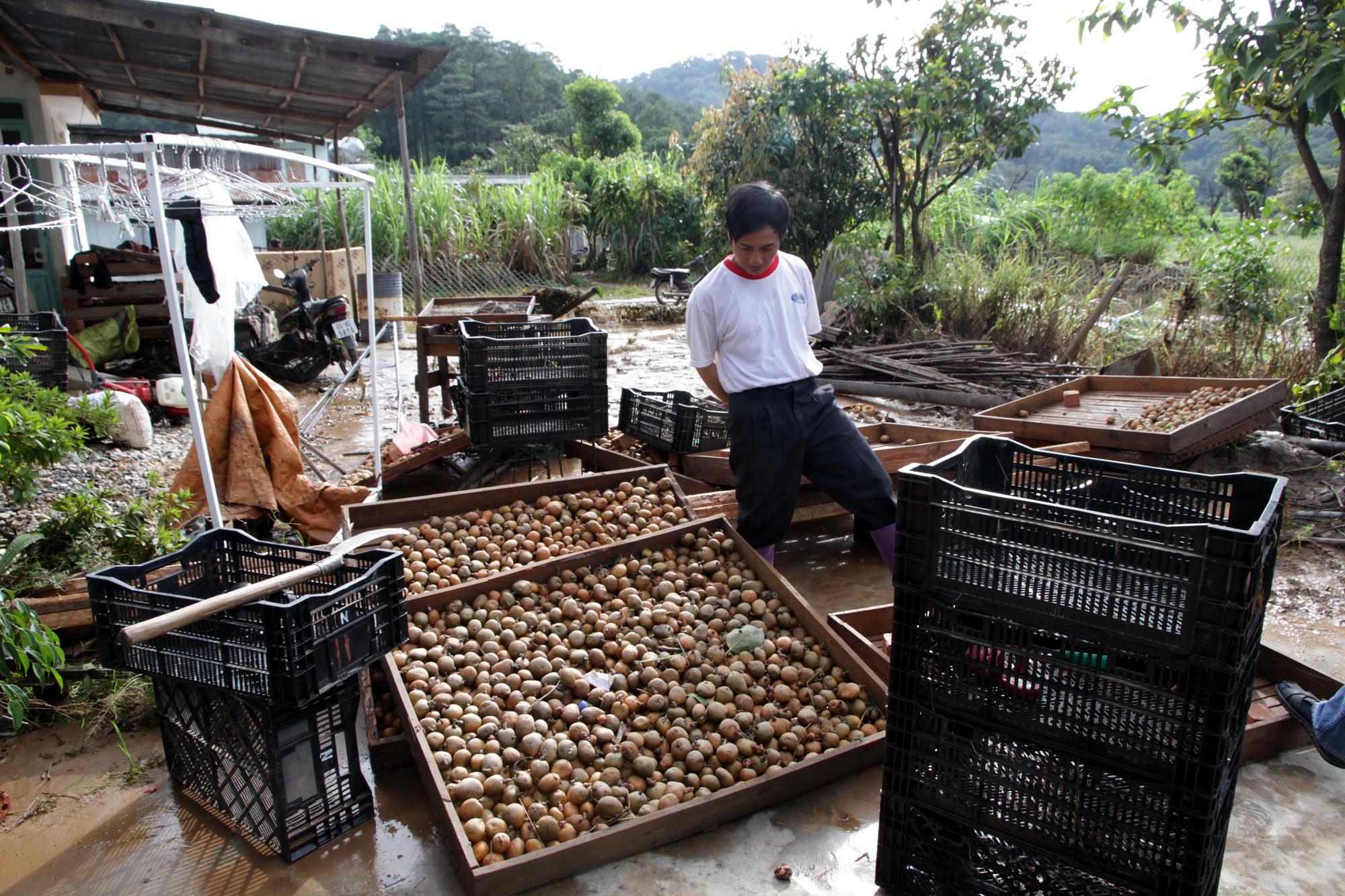 Ông Phạm Văn Nho nhặt nhạnh số khoai tây bị lũ cuốn trôi