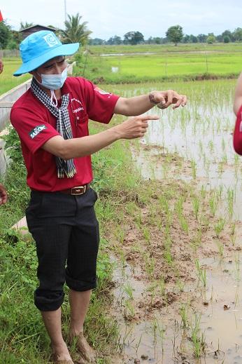 Cán bộ Tổng công ty Nông nghiệp Sài Gòn hướng dẫn lỹ thuật trồng lúa cho bà con nông dânẢNH: SAGRI