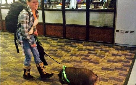 Nữ hành khách và lợn. Ảnh: Twitter