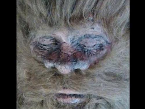 Hình ảnh được cho là mặt quái thú Bigfoot. Ảnh: Cắt từ Youtube