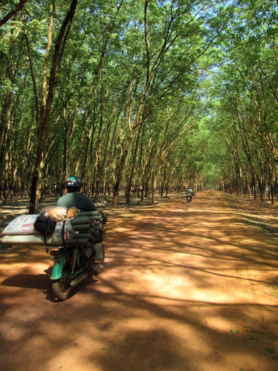 Đi xuyên qua những cánh rừng cao su bạt ngàn.