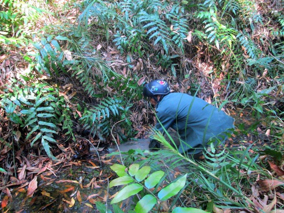 Xuyên rừng săn lươn