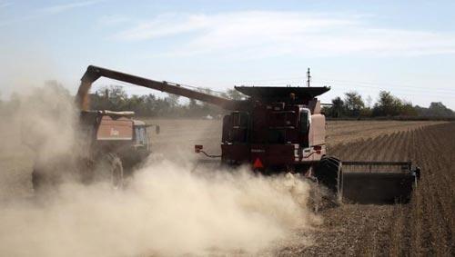 Trung Quốc thỏa thuận trao đổi tiền tệ trị giá 11 tỉ USD trogn 3 năm với Argentina, một trong các mục đích là đảm bảo nguồn đậu nành Ảnh: REUTERS