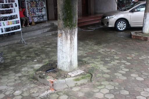 Gốc cây nơi Trần Văn Hoàng đã lao xe vào. Hiện trường vẫn còn vương một vài mảnh vỡ từ chiếc xe