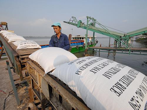 Tương lai hạt gạo Việt Nam không khá hơn khi có thêm ông lớn Vinafood 1 tham gia đàm phán các hợp đồng xuất khẩu Ảnh:  NGỌC TRINH