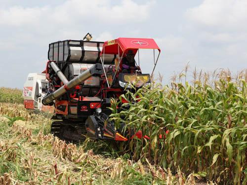 Mô hình trồng bắp hiện đại của Bầu Đức ở Campuchia. Ảnh: HAGL
