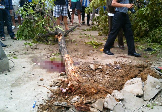 Sau khi cán chết 2 người, chiếc xe buýt điên còn đâm đổ 1 cây xanh bên đường mới dừng lại