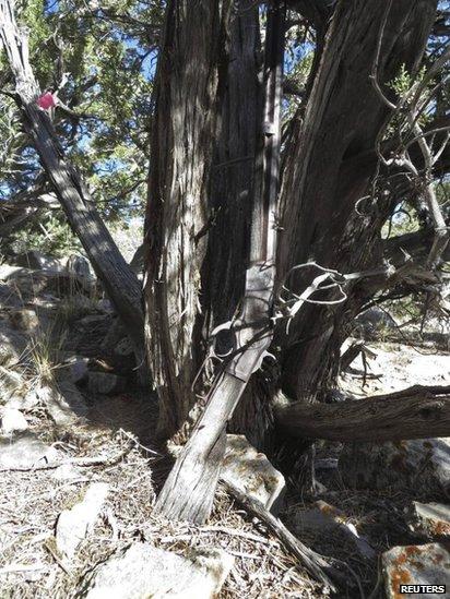 Cây súng trường Winchester dựng cạnh một gốc cây trong công viên quốc gia Great Basin. Ảnh: Reuters