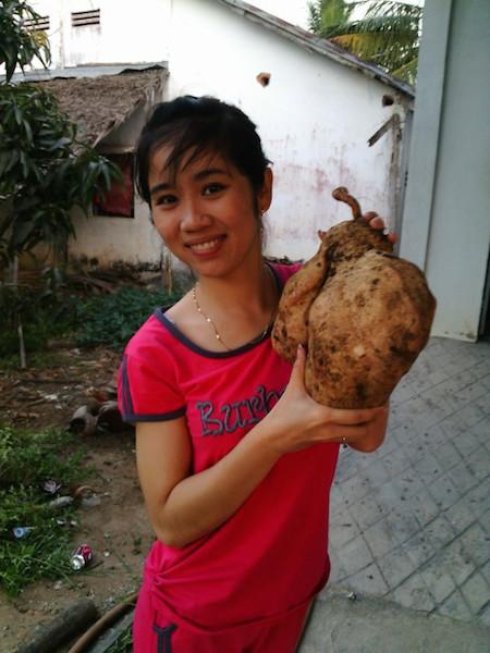 Chị Thoa và củ khoai lang khủng