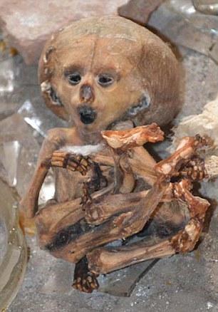 Xác ướp một đứa trẻ sơ sinh trong phòng thí nghiệm bỏ hoang. Ảnh: Daily Mail