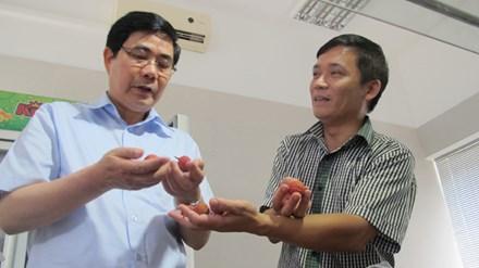 Bộ trưởng NN&PTNT Cao Đức Phát (trái) thăm khu chiếu xạ vải thiều tại Hà Nội. Ảnh: Phạm Anh.