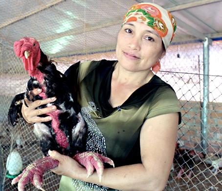 Bà Phan Thị Loan, Giám đốc Công ty TNHH nghiên cứu sản xuất Đất Việt giới thiệu gà giống Đông Tảo thuần chủng.