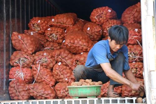 Khoai tây Trung Quốc tràn ngập chợ Nông sản Đà Lạt 1
