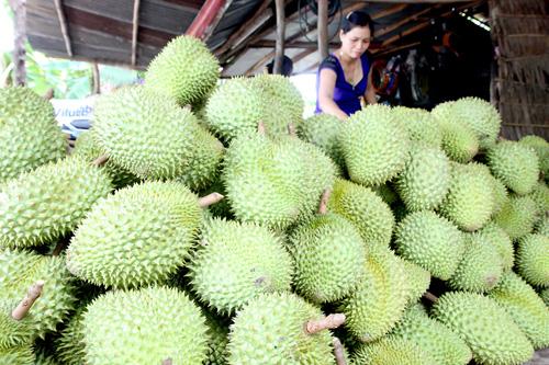 Sầu riêng Thái và Ri6 tại Long Khánh được bán với giá 38.000 - 40.000 đồng/kg. Ảnh: Đình Huệ - TTXVN