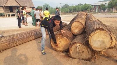 Nhiều người dân tham gia bắt gỗ do lâm tặc vận chuyển
