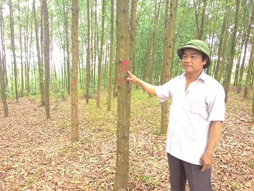 Những khu rừng đạt chuẩn FSC của thôn Bến Ván