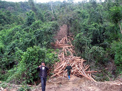 Tỉnh Quảng Nam nhìn nhận việc cho một doanh nghiệp Trung Quốc thuê đất rừng ở các huyện biên giới là nhạy cảm.  (Ảnh chỉ có tính chất minh họa)