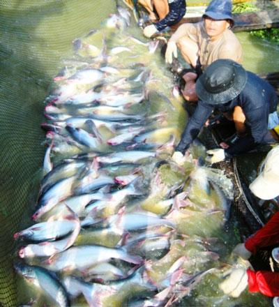 Xuất khẩu thủy sản của Việt Nam trong nửa đầu năm giảm mạnh ở hầu hết các thị trườngẢnh: THỐT NỐT
