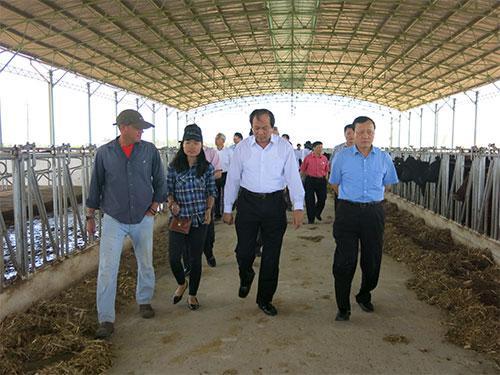 Lãnh đạo tỉnh Hà Nam thăm trang trại bò của Hoàng Anh Gia Lai