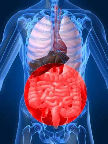 Thuốc mới duy trì sự sống bằng cách giảm tổn hại ở ruột do nhiễm xạ Ảnh: MNT