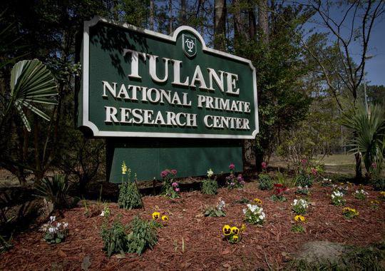 Trung tâm Nghiên cứu Linh trưởng Quốc gia Tulane Ảnh: TRƯỜNG ĐH TULANE