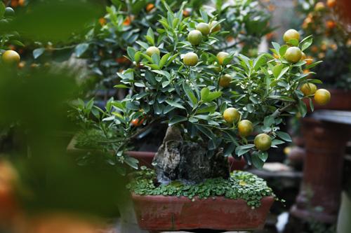 Khách hàng năm nay thường thích chọn những cây nhỏ nhưng độc đáo