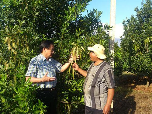 UBND tỉnh Đắk Lắk cho rằng cây mắc ca trồng ở địa phương phát triển tốt nhưng tỉ lệ đậu quả thấp