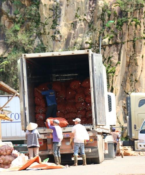 Khoai tây Trung Quốc tràn ngập chợ Nông sản Đà Lạt 2