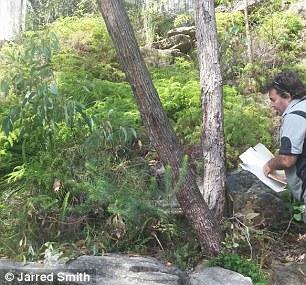 Nhân viên WIRES đã thả con rắn về rừng. Ảnh: Jarred Smith