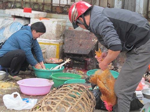 Giết mổ gia cầm thiếu vệ sinh sẽ dễ gây lây lan dịch cúm gia cầm Ảnh: VĂN DUẨN