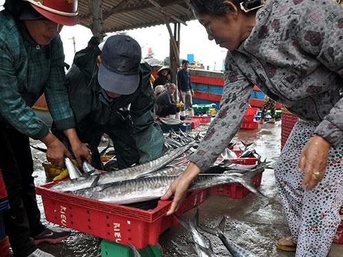 Sau khi tàu cập bến, cá được các thương lái thu mua ngay tại chỗ