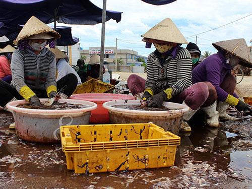 Khẩn trương làm cá khi tàu thuyền cập bến