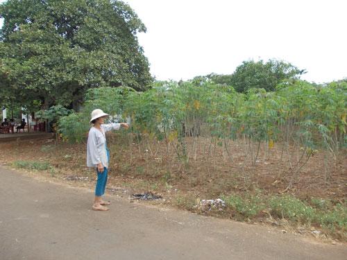 Nông dân huyện Xuyên Mộc, tỉnh Bà Rịa - Vũng Tàu điêu đứng vì khoai mì bán không ai mua
