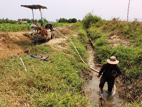 Người dân thuê máy bơm nước cứu lúa