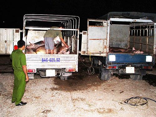 Hai xe chở heo đã bơm nước do Huỳnh Thanh Long chủ mưu  (Ảnh do Công an tỉnh Vĩnh Long cung cấp)
