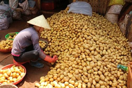 Khoai tây Trung Quốc tràn ngập chợ Nông sản Đà Lạt 7
