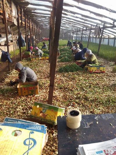 Lao động người Việt làm việc chui tại Nga