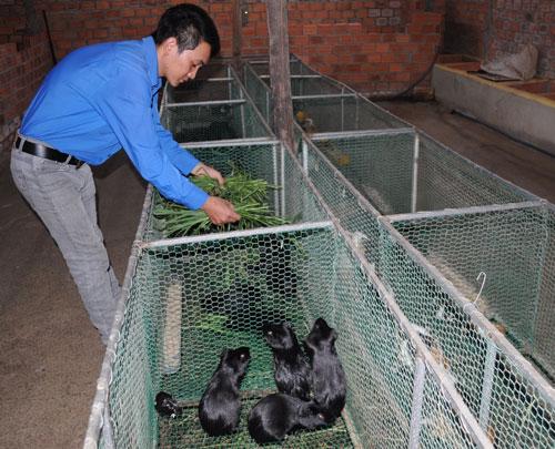 Mô hình nuôi chuột, nhím... của anh Lưu Minh Tuấn