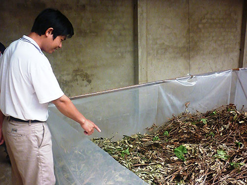 Dế được anh Nguyễn Quang Huy nuôi theo quy trình sạch