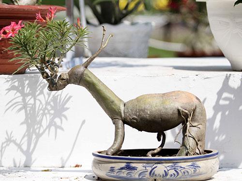 Gốc sứ hình con dê - linh vật của năm nay - được trưng bày tại Hội Hoa Xuân TP HCM Ảnh: HOÀNG TRIỀU