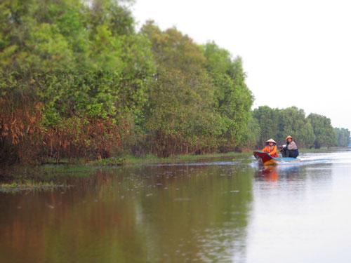 Hệ sinh thái ngập nước Tràm Chim, Đồng Tháp có nguy cơ suy thoái đa dạng sinh học vì hệ thống thủy điện trên sông Mê Kông