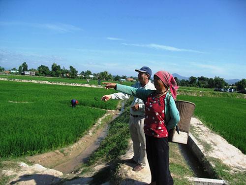 Cánh đồng lúa xanh mát trên vùng cao xã Suối Trai, huyện Sơn Hòa, tỉnh Phú Yên  ghi dấu ấn của các cán bộ trẻ Ảnh: HỒNG ÁNH