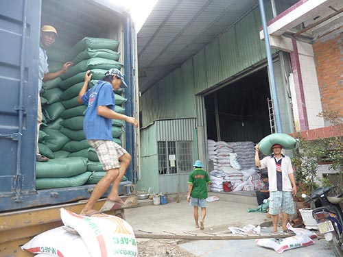 Giá lúa gạo tại đồng bằng sông Cửu Long đang giảm